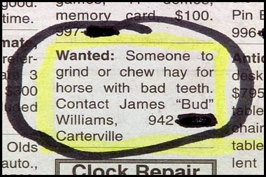 chew hay for horse funny job ads