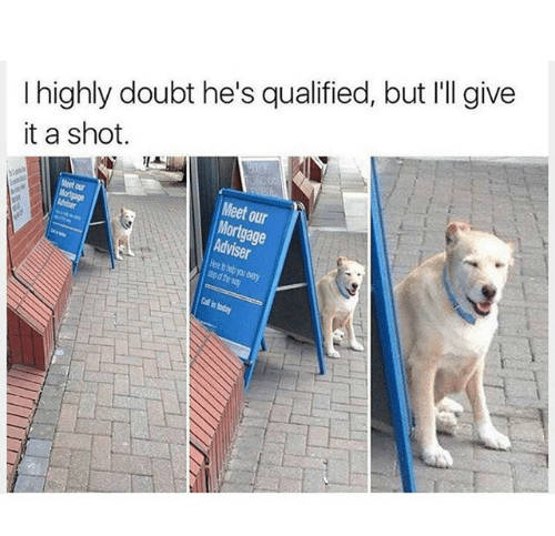 dog overqualified meme